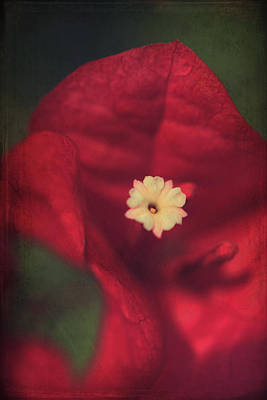 Red Flowers Digital Art - Cradle Me In Your Arms by Laurie Search