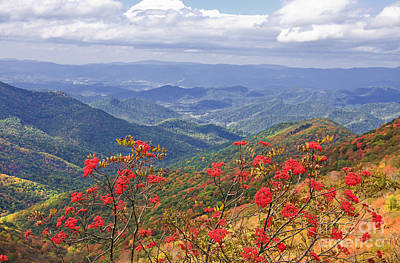 Photograph - Craggy Gardens In The Fall by Jill Lang