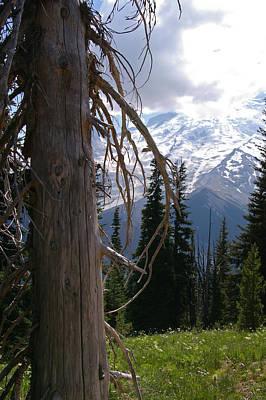 Photograph - Craggy Mountain Tree by Christine Burdine