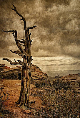 Photograph - Crags And Crooks II by Leda Robertson