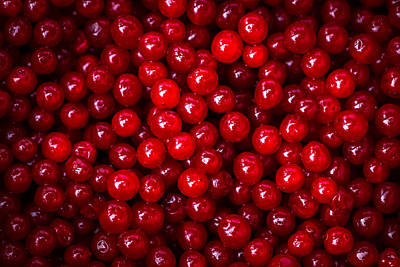 Cranberries - 1 Art Print by Alexander Senin