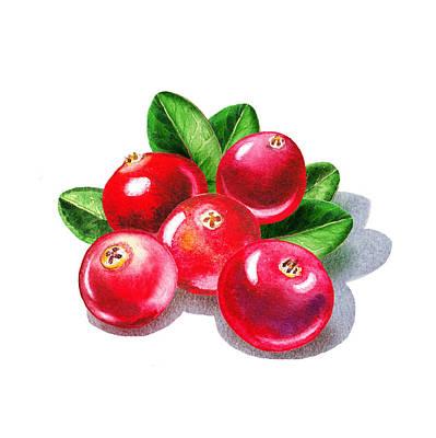 Painting - Cranberries by Irina Sztukowski