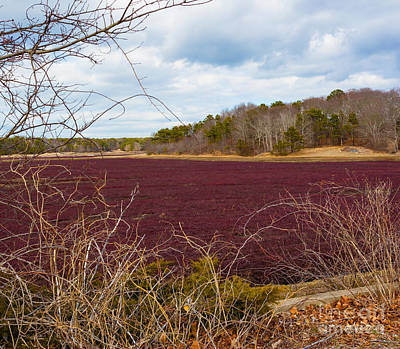 Photograph - Cranberry Fields Forever by Michelle Wiarda-Constantine