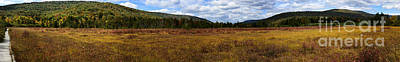 Cranberry Glades Autumn Panoramic Art Print by Thomas R Fletcher