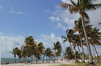 Photograph - Crandon Park Beach by Theresa Willingham
