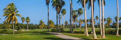 Photograph - Crandon Park Palms by Ed Gleichman