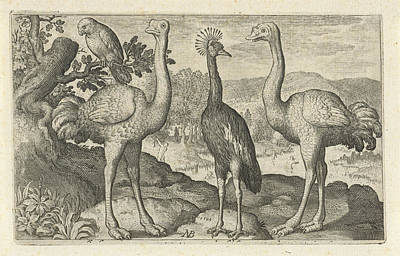 Ostrich Drawing - Crane Between Two Ostriches, Print Maker Nicolaes De Bruyn by Nicolaes De Bruyn And Nicolaes De Bruyn And Francoys Van Beusekom