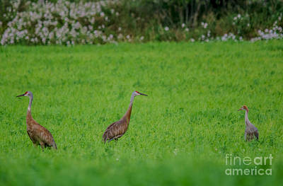 Photograph - Crane Family by Cheryl Baxter