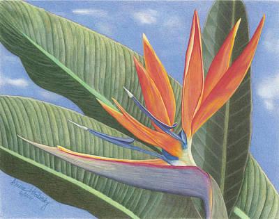 Crane Flower Paradise Original