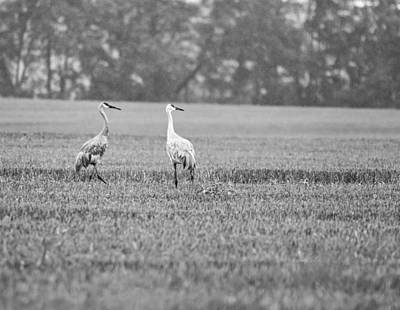Photograph - Crane In Black And White 2 by John Crothers