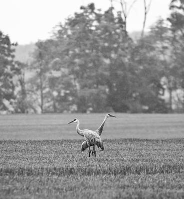 Photograph - Crane In Black And White by John Crothers