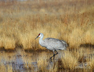 Art Print featuring the photograph  Solitary Crane In The Field by Ruth Jolly