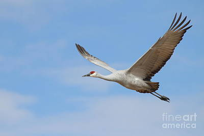 Art Print featuring the photograph Crane In The Skies by Ruth Jolly