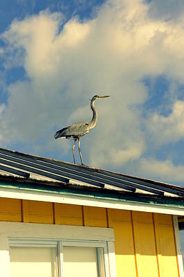 Photograph - Heron On A Hot Tin Roof by Laurie Perry