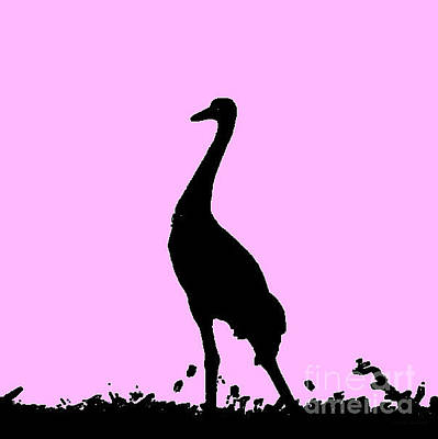 Photograph - Crane Powder Pink by Anita Lewis