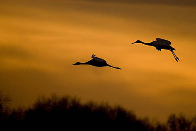 Cranes At Sunset Art Print by Larry Bohlin