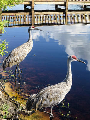 Iphone Case Photograph - Cranes At The Lake by Zina Stromberg