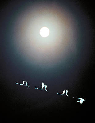Cranes Flying Across The Moon Art Print by Panoramic Images