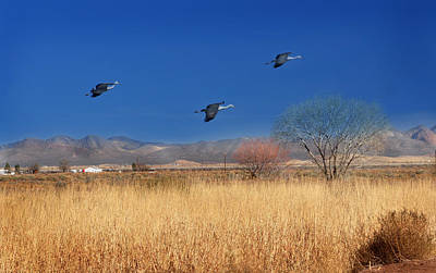 Photograph - Cranes In Flight by Barbara Manis