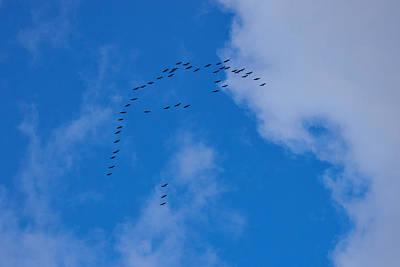 Photograph - Cranes by Kukka Lehto