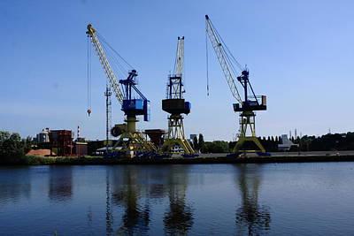 Cranes On The River Bank Art Print
