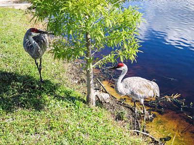 Crane Painting - Cranes by Zina Stromberg