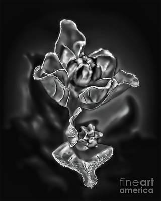 Crape Myrtle Pods 3671 Art Print