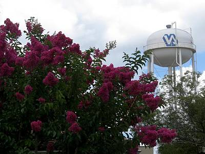 Crape Myrtle And Water Tower Art Print