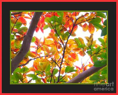 Leaves Photograph - Crapemyrtle Fall Color V1 by Scott Cameron