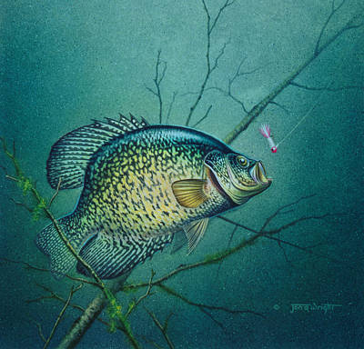 Jon Q Wright Painting - Crappie And Pink Jig by Jon Q Wright