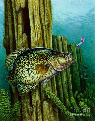 Crappie And Posts Art Print by Jon Q Wright