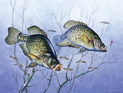 Ice Fishing Painting - Crappie Brush Pile by JQ Licensing