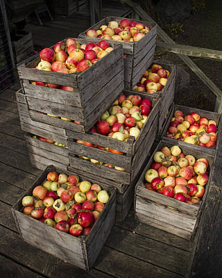 Crated Apples Art Print by Randall Nyhof