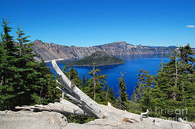 Crater Lake And Fallen Tree Art Print by Debra Thompson
