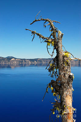 Photograph - Crater Lake Lone Tree by Debra Thompson