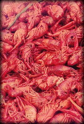 Winter Animals Rights Managed Images - Crawfish Boil Royalty-Free Image by Glenn Aker
