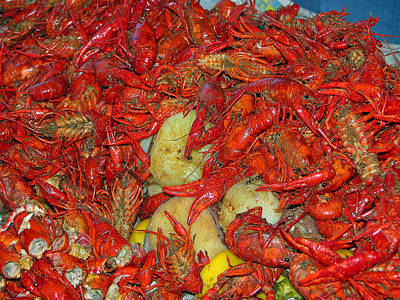 Photograph - Crawfish Or Crayfish by Helen Haw