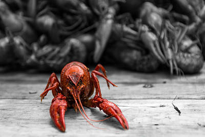 New Orleans Wall Art - Photograph - Crawfish With Attitude by Brad Monnerjahn