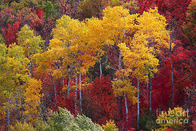 Photograph - Crazy Color by Bill Singleton