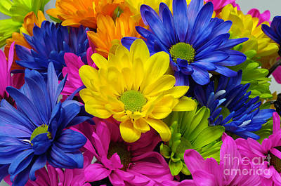 Photograph - Colorful Crazy Daisies 3 by Andee Design