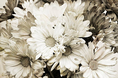 Photograph - Crazy Daisies In Black And White by Andee Design
