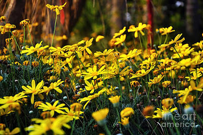 Crazy Daisies Art Print by Kaye Menner