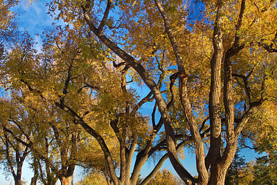 Trees Photograph - Crazy Golden Tree Sky by James BO  Insogna