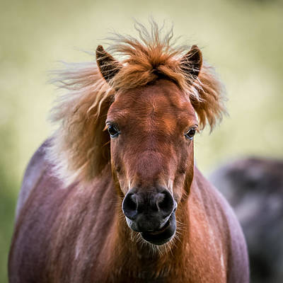 Broodmare Digital Art - Crazy Mane by Paul Freidlund