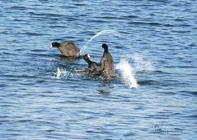 Photograph - Crazy Ole Coots   by Ericamaxine Price