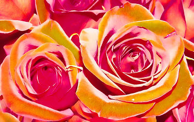 Photograph - Crazy Rose by Kristie  Bonnewell