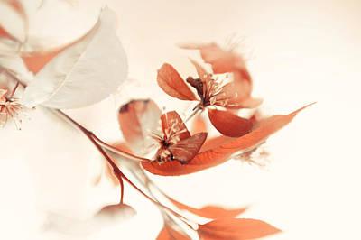Photograph - Creamy Dream by Jenny Rainbow