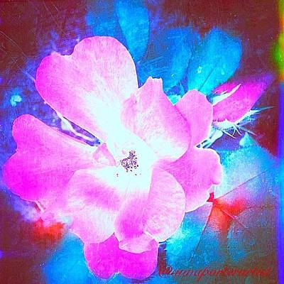 Florals Photograph - Creative Energies by Anna Porter