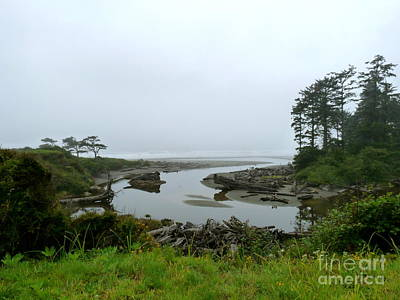 Photograph - Creek At Kalaloch by Terri Thompson
