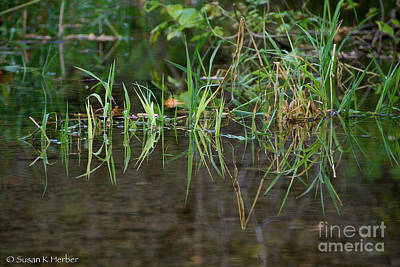 Photograph - Creek Grass by Susan Herber